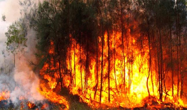 Incendios en la Amazonía provocará cancelar todos los acuerdos comerciales que tenga Brasil con Francia e Irlanda