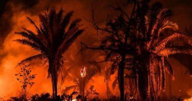 Los incendios en la selva amazónica de Brasil aumentaron en casi un 20%